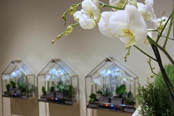 Теплица для орхидеи своими руками